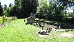 Kleiner Arterhof-Zoo